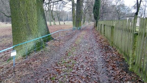 Blick auf einen unbefestigten Weg, der rechts von einem Holzzaun und links von einem blauen Elektronetzzaun begrenzt wird
