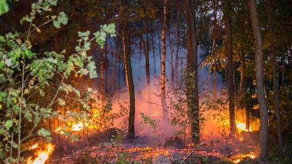 Waldbrand in Mittelbach bei Pulsnitz
