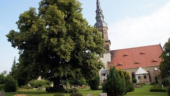 Lutherlinde in Possendorf
