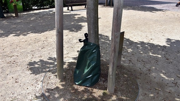 Ein Bewässerungssack an einem Baum am Johannisplatz