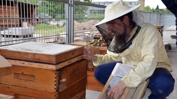 Bienenzuchtprogramm gegen Milbenbefall Chemnitz