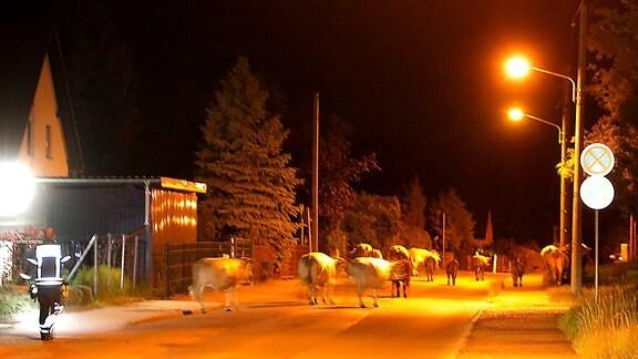 Eine Kuhherde läuft in der Nacht über eine beleuchtete Straße in einem Wohngebiet