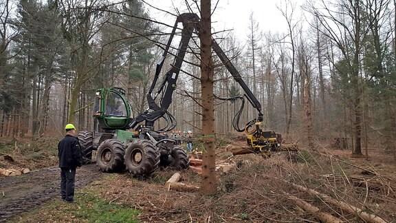 Ein Harvester, der so groß ist wie ein Traktor hebt mit einer langen Kranvorrichtung einen auf ca. zwei Meter Länge vorgesägten Baumstamm aus dem Unterholz.
