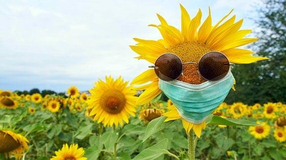 Eine Sonnenblume mit Mundschutz