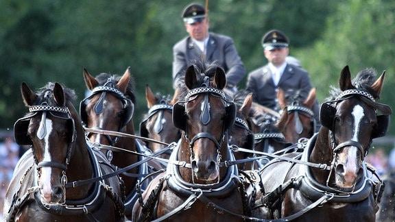 Pferde vor einer Kutsche.