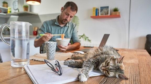 Katze liegt auf einem Tisch