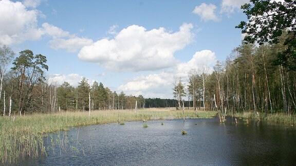 Der Zadlitzbruch im Naturschutzgebiet Presseler Heidewald- und Moorgebiet im Naturpark Dübener Heide.