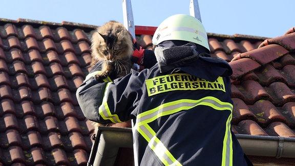 Feuerwehr rettet hilflose Katze vom Dach