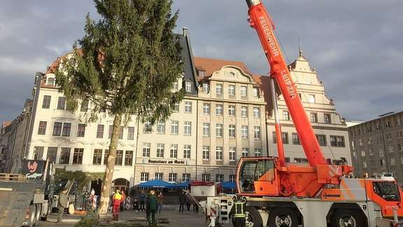 Ein Kran der Feuerwehr stellt den Baum für den Leipziger Weihnachtsmarkt 2019 auf dem Markt auf.