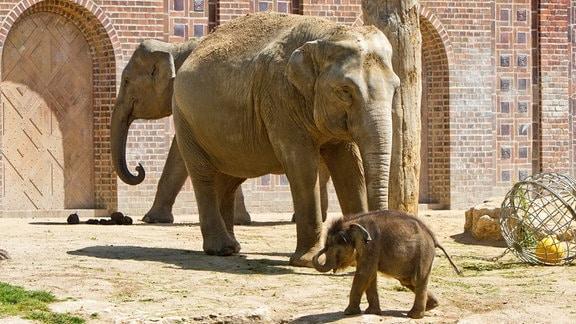 Zwei Elefanten stehen mit einem Jungtier in einer Anlage des Leipziger Zoos