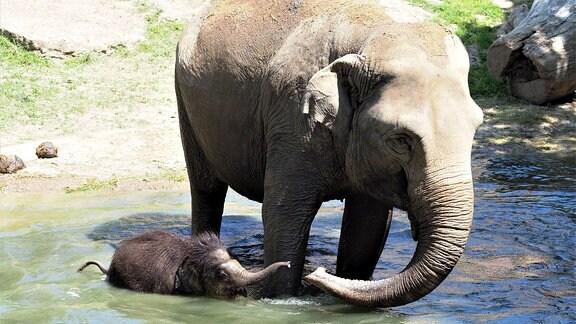 Das Elefantenbaby Bền Lòng geht mit seiner Tante Don Chung baden. Am 5. Juni werden Rekordtemperaturen erwartet.