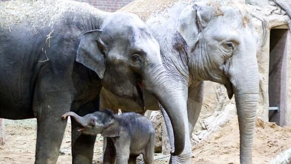 Elefantenbaby Zoo Leipzig