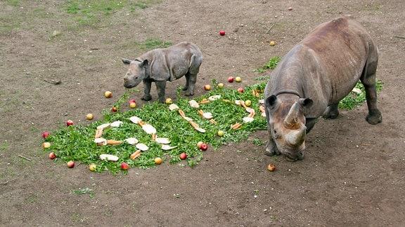 Nashorn Leipzig Zoo