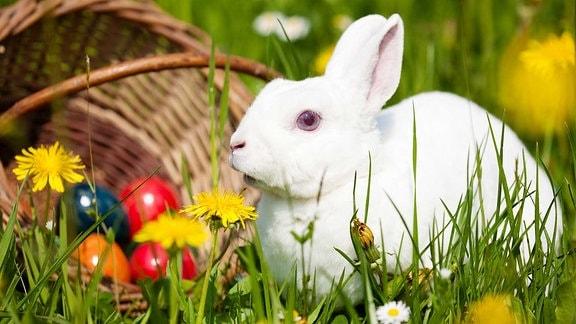 Ein weißer Hase sitzt auf der Wiese mit einem Korb voller bunter Ostereier.