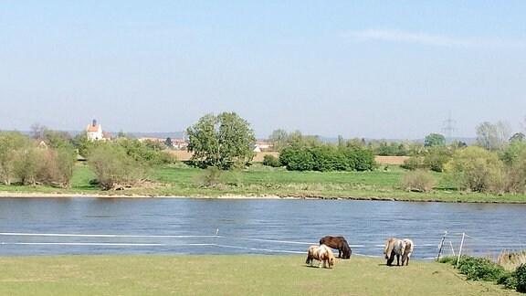 Pferde stehen auf einer Weide an einem Fluss.