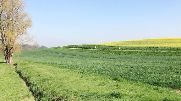 Eine Straße führt zwischen grünen und gelben Feldern entlang.