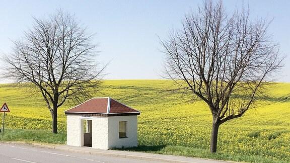 Ein weißes Buswartehäuschen zwischen Bäumen, im Hintergrund liegt ein Rapsfeld.