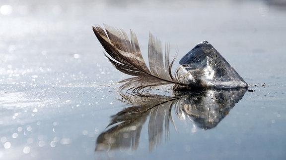 Eine Feder ist auf Eis festgefroren