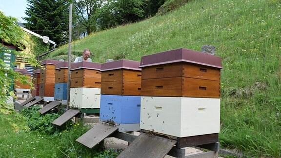 Mehrere Bienenkästen stehen in einer Reihe im Freien.