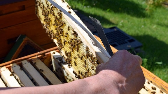 Ein Imker hat ein Bienenmagazin in den Händen.