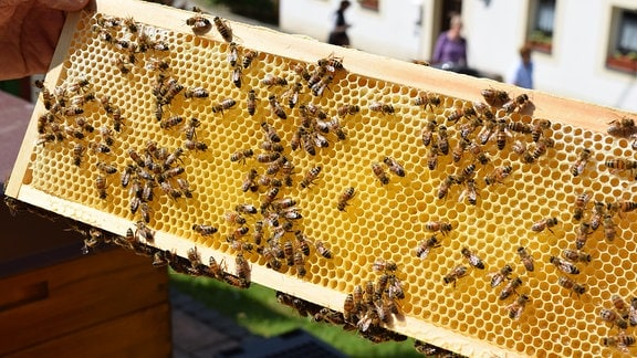 Bienen auf der Wabe.