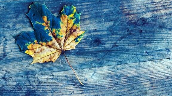 Blaue Blätter im Hasenwald
