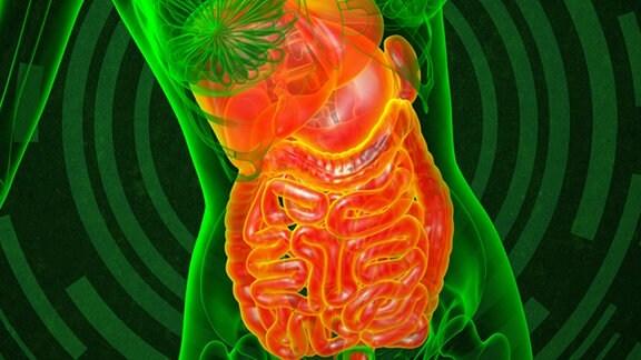 3D-Illustration des menschlichen Verdauungssystems von vorn