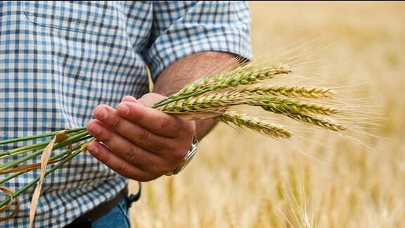 Ein Mann hält Getreide in seiner Hand