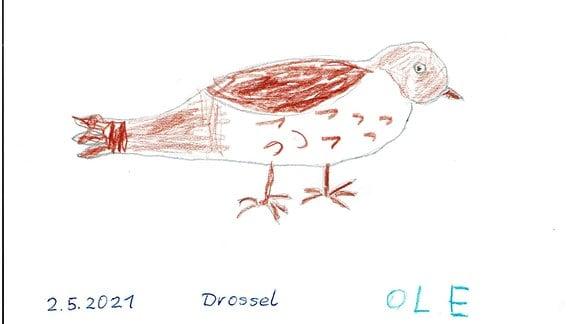 Gemalte Drossel