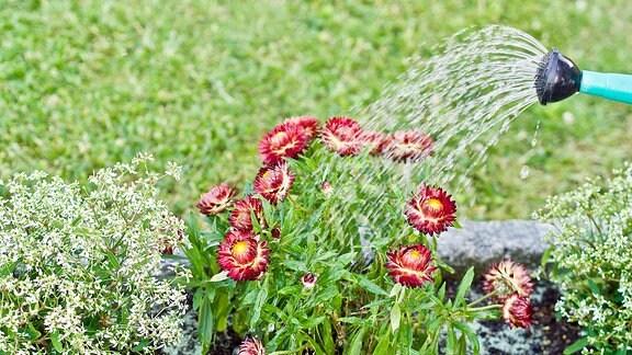 Gießkanne Garten Blumenbeet