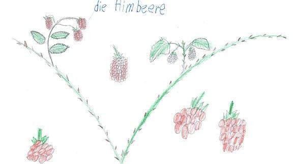 Ein Bild gemalt von Elias: ein Himbeerstrauch.
