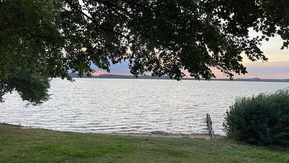 Baum, Wiese und Strauch an Seeufer.