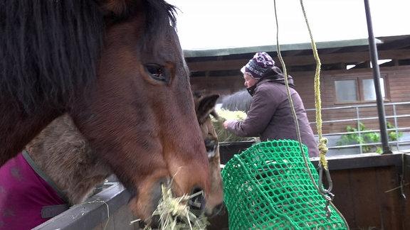 Susanne Müller füttert ihre Pferde