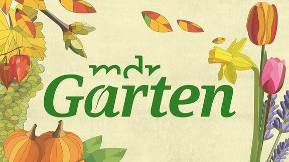 MDR Garten - Logo