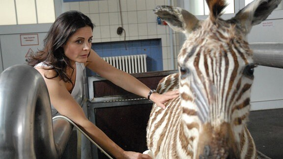 Zebrastute Elsa ist trächtig. Tierärztin Dr. Susanne Mertens (Elisabeth Lanz) sorgt sich um den Gesundheitszustand des Fötus. Dessen Herztöne sind zu schwach und es besteht Lebensgefahr für Mutter und Kind.
