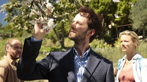 Ein Mann schaut sich Kirschblüten an.