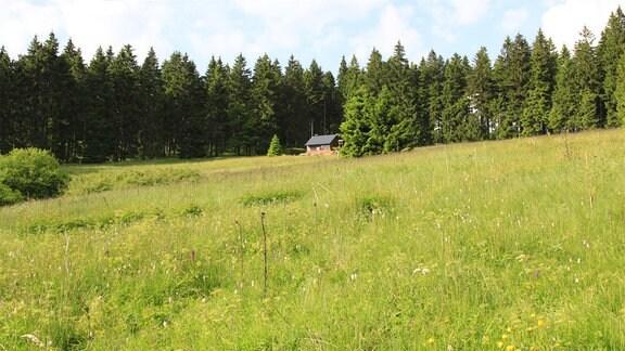 Der Rennsteig, ein knapp 170 Kilometer langer Höhenweg über den Kamm des Thüringer Waldes. Seine Geschichte geht bis ins 9. Jahrhundert zurück.