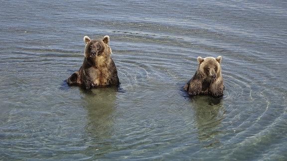 Bärenparadies