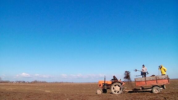 5% der Kartoffeln und 10% des Kohls von ganz Rumänien produziert das Dorf – aber es gibt keine Abnehmer. Der größte Teil der Ernte wird vernichtet.