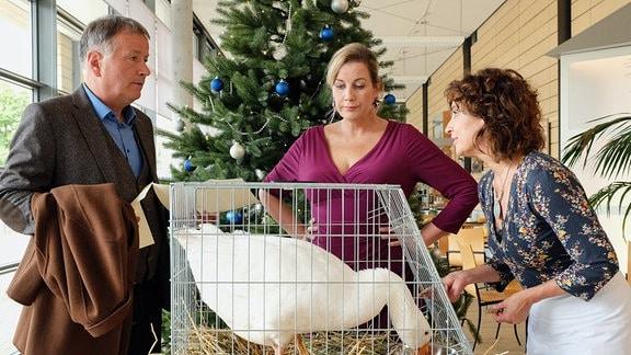 In die Sachsenklinik wird für Dr. Roland Heilmann (Thomas Rühmann, li.) eine Ganz angeliefert. Während sich Linda Schneider (Isabel Varell, re.) rührend kümmert, geht das Ganze Sarah Marquardt (Alexa Maria Surholt, mi.) zu weit. Als Roland endlich dazukommt, klärt sich auf, dass die Gans ein Weihnachtsgeschenk eines ehemaligen Patienten ist.