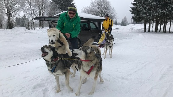 Ein Musher leihnt drei Schlittenhunde an.