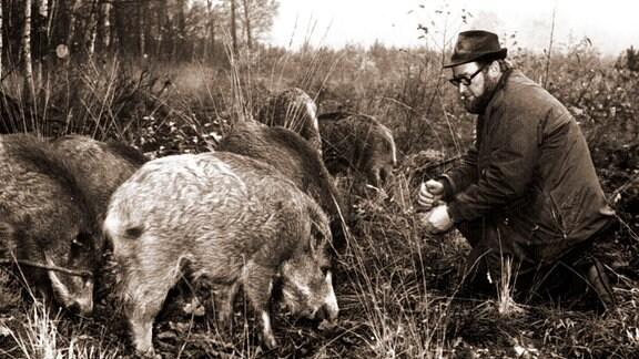 Heinz Meynhardt mit Wildschweinen