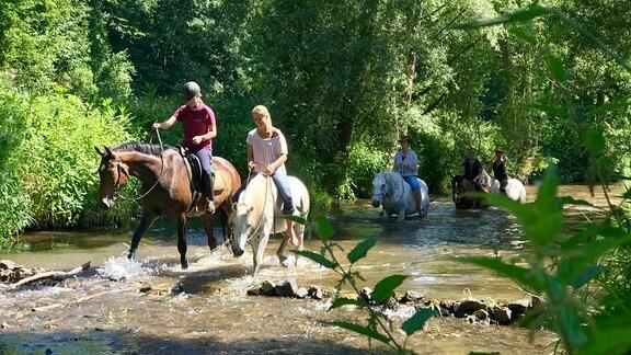 Ein Paradies für Pferde ist das Striegisthal. Im Naturschutz-Gebiet hat der Reit- und Fahrverein ein Gelände für seinen Vielseitigkeits-Sport gepachtet. Das Schönste bei dieser Art des Reitens hier, ist das Bad danach in der Striegis.
