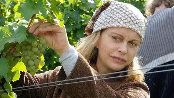 Skeptisch beobachtet die Erntehelferin Gabi (Edda Leesch) beim Pflücken von Trauben  ihre Rivalin.