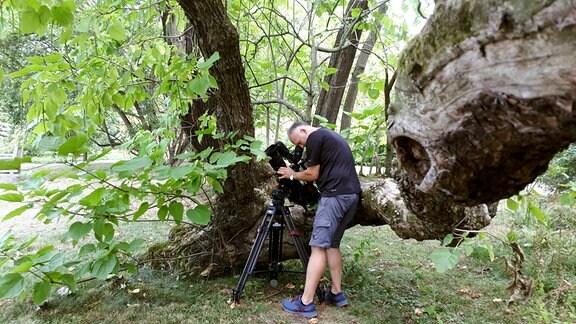 Aufnahme des Trompetenbaums im Botanischen Garten Leipzig.