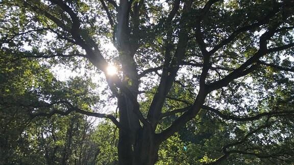 Einzelbaum in einem Wald