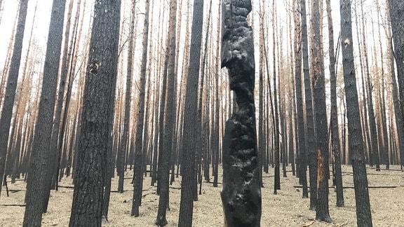 Waldbrandfläche in Treuenbrietzen