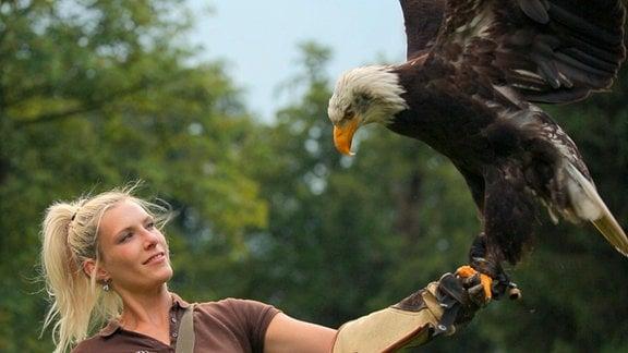 Falknerin Lisa mit Weißkopfseeadler Maggie