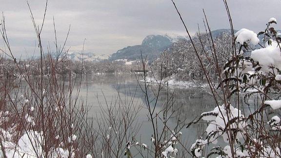 Winterlandschaft bei Kufstein. Blick durch schneebedekte Büsche auf den Inn. Im Hintergrund schneebedeckte Alpengipfel.
