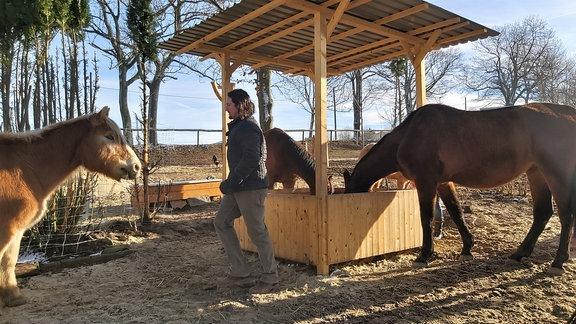 Ganz nah dran am Loipenareal – idyllisch zwischen Wald und Feld – liegt der Pferdehof von Familie Voglsang. Die Morgensonne wärmt nur ein bisschen, trotzdem müssen die vier Pferde ran zum Frühsport in der Führanlage. Erst dann gibt's Futter.